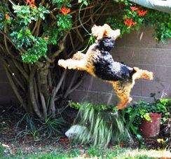 Kieran jumping 2.jpg