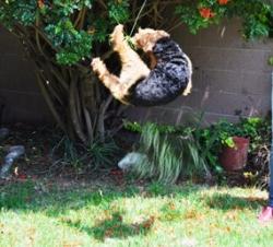 Kieran jumping 1.jpg