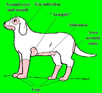 Does Your Dog Have Allergies? — TranquilPET - Canine ...