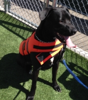Trigger posing in his life vest.