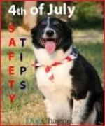 dog - safety tips.jpg