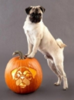 Pet Safety at Halloween