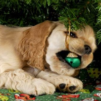 Puppy w xmas ball in mouth.jpg