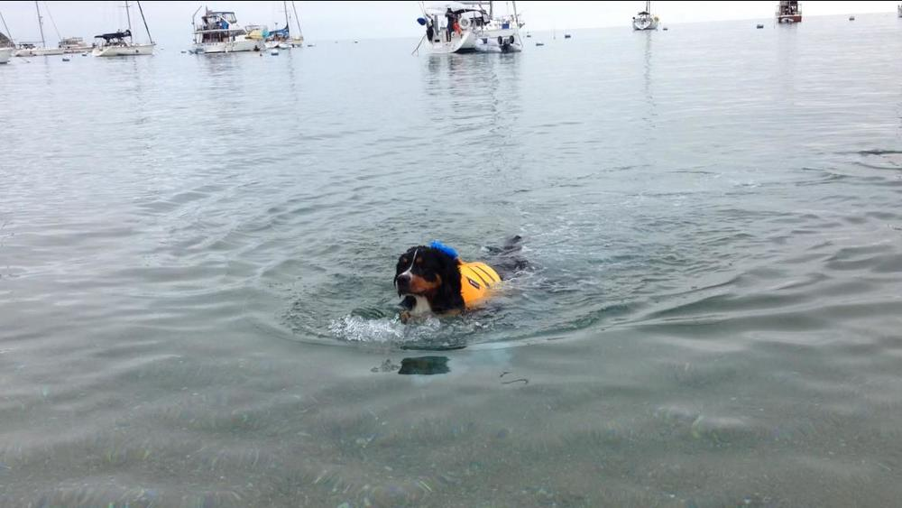 Molly - swimming in ocean Catalina.jpg