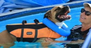 Swim therapy, hydrotherapy, dog swimming, canine swimming
