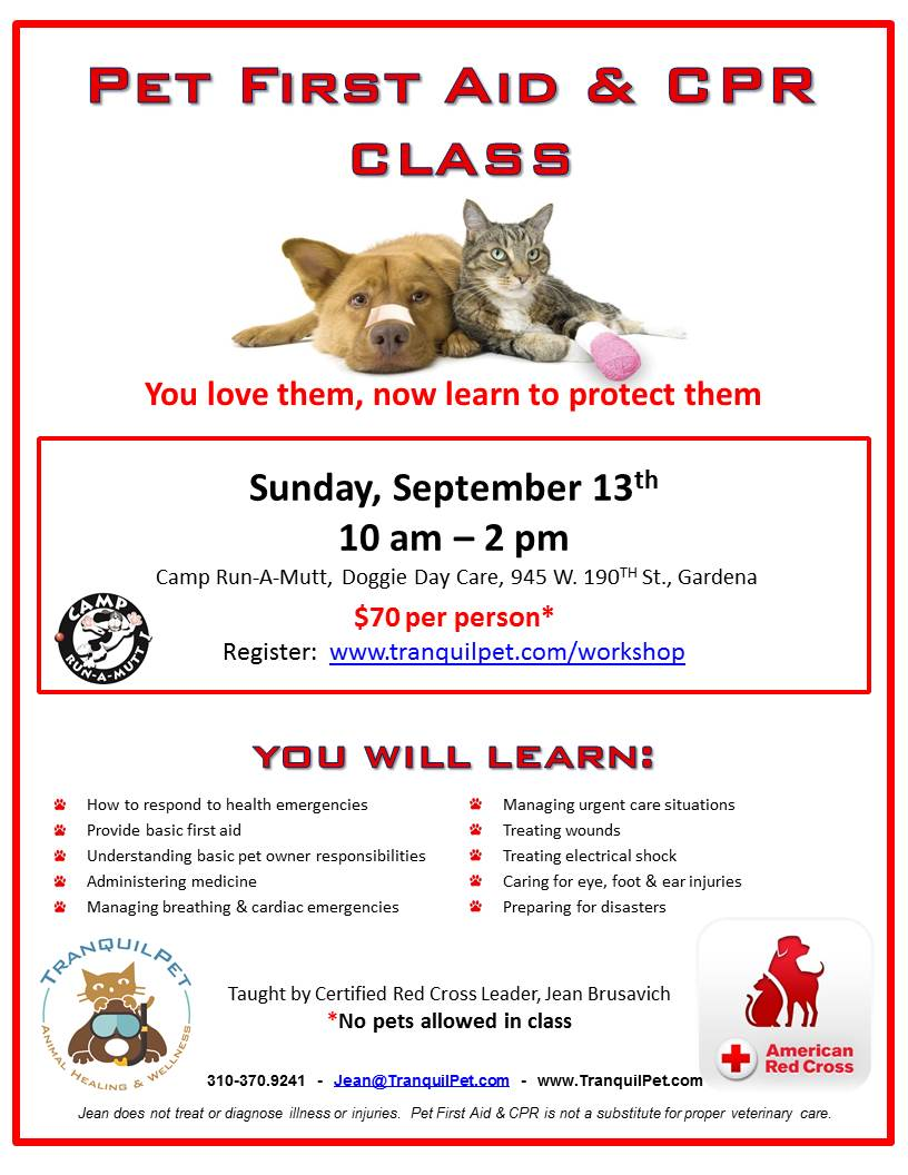 Pet First Aid and CPR Class, pet first aid and CPR