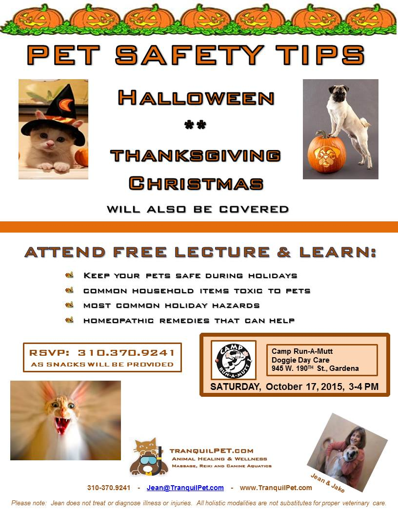 Pet Safety Tips for Holidays:  Halloween, Thanksgiving, Christmas