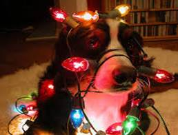 Holiday Safey Tips for Pet