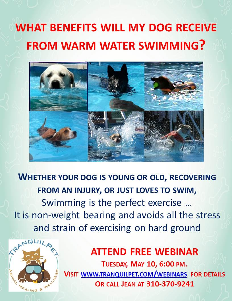 swim therapy for dogs, warm water swimming for dogs, senior dogs, elderly dogs