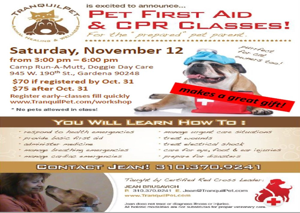 Pet First Aid Class & CPR Flyer