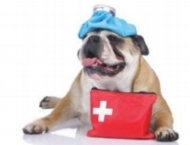 pet first aid & cpr class