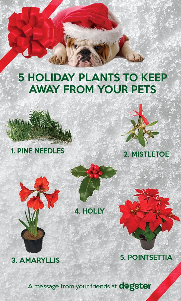 holiday pet safety tips, pet safety tips