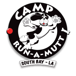 "Camp Run-A-Mutt/South Bay Tour of Camp & Playtime in Camp Yard Tour ""new"" honky cat hotel & cat cafe & free teeth brushing"