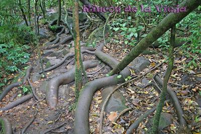 http://www.marietta.edu/~biol/biomes/troprain.htm