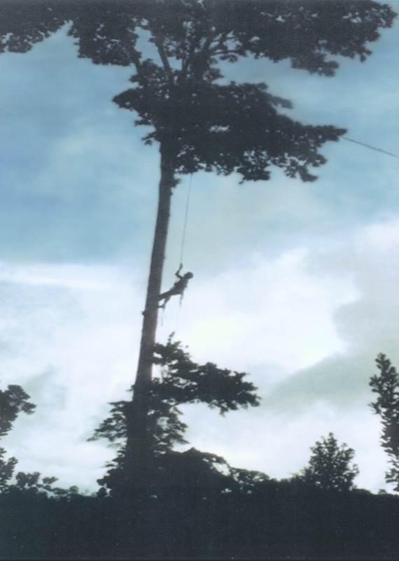 tree-climbing-photo.jpg