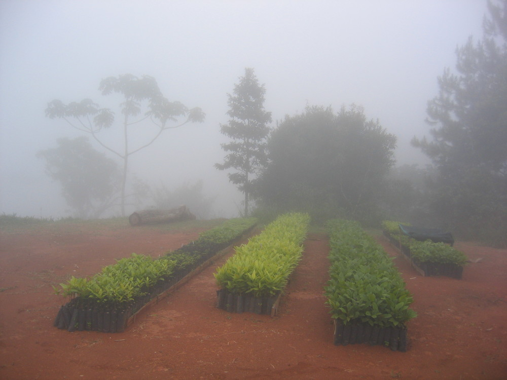 Tree nursery in the cloud.  Photo of the month, May 2013.