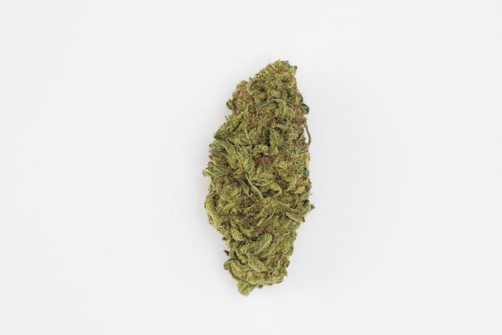 cannabis-02-101A1986.jpg