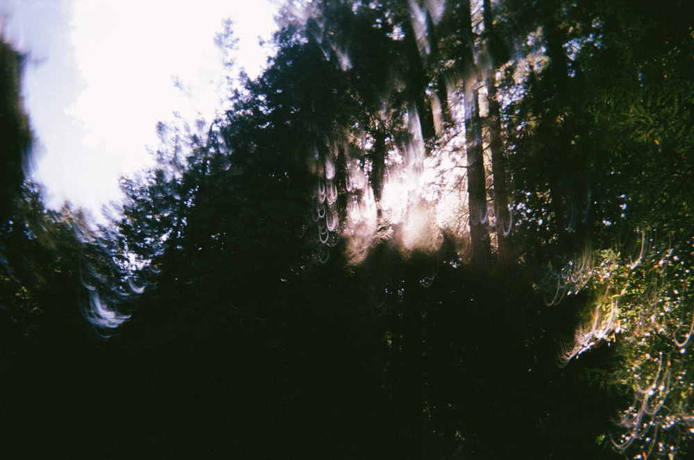 Fujifilm disposable