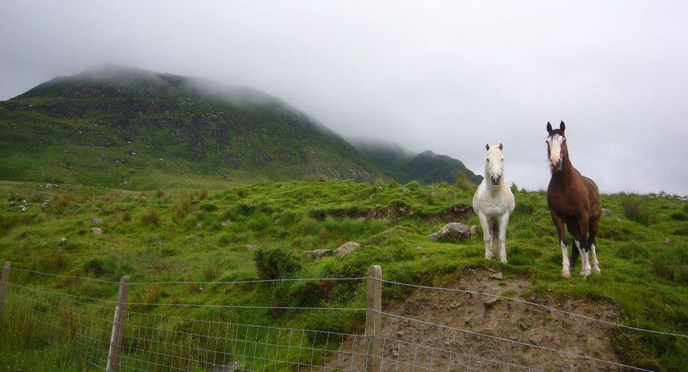 Spirit guides in Ireland.