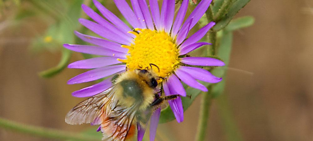 Busy Neighborhood Bees