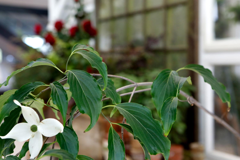 FlowerPower MB 240614 Marie Staggat-018.JPG