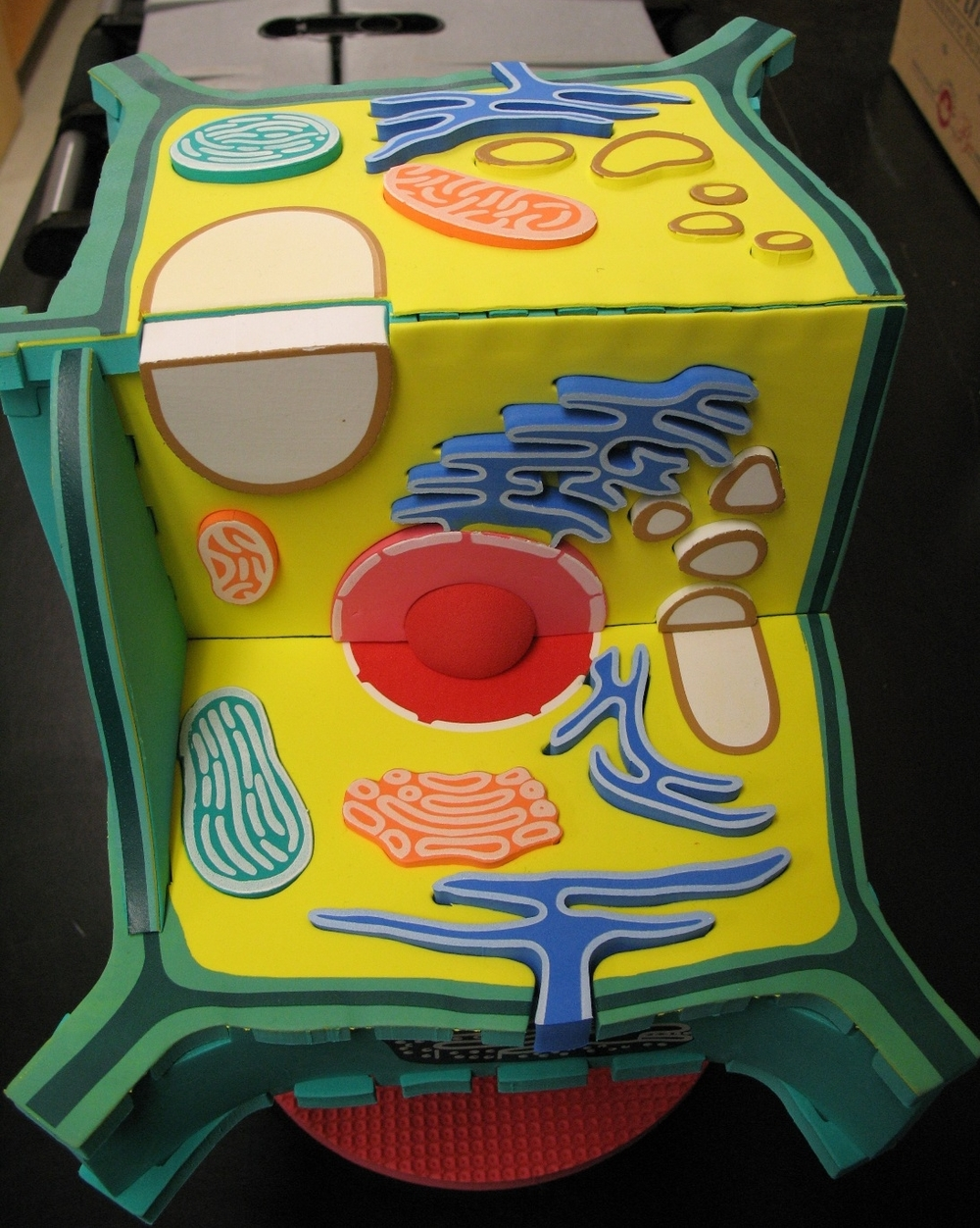 3d plant cell model project materials - Praxis Plant Cell Model