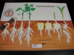 Praxis Germination Model