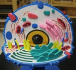 Praxis Animal Cell Model