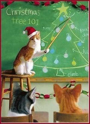 Christmas Tree 101