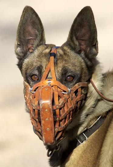 Contemporary dog muzzle featured on leerburg.com