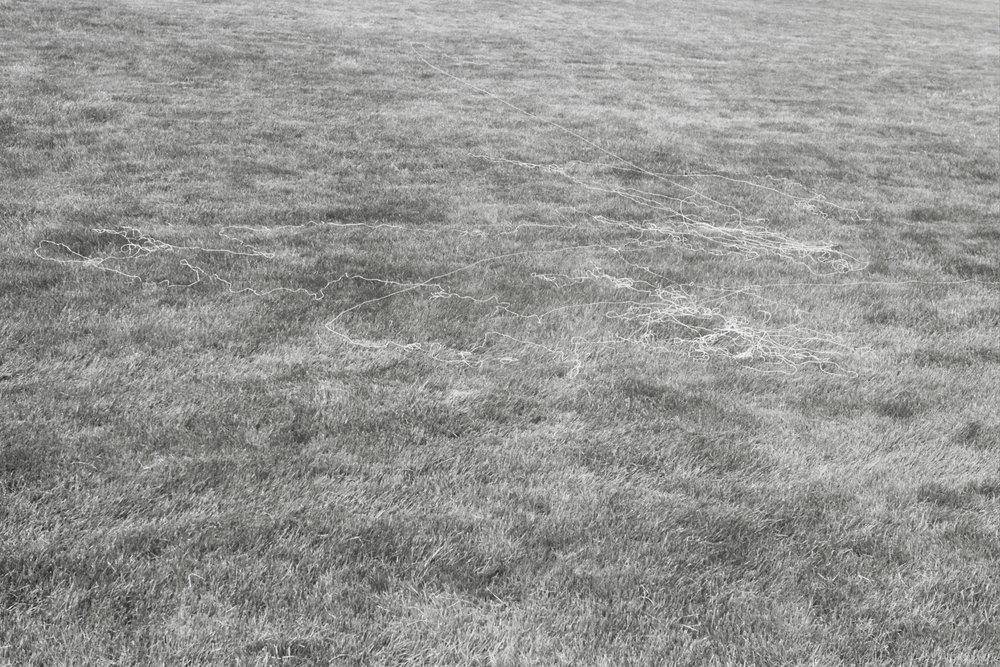 North Meadow.jpg