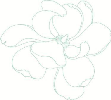 magnolia small.JPG