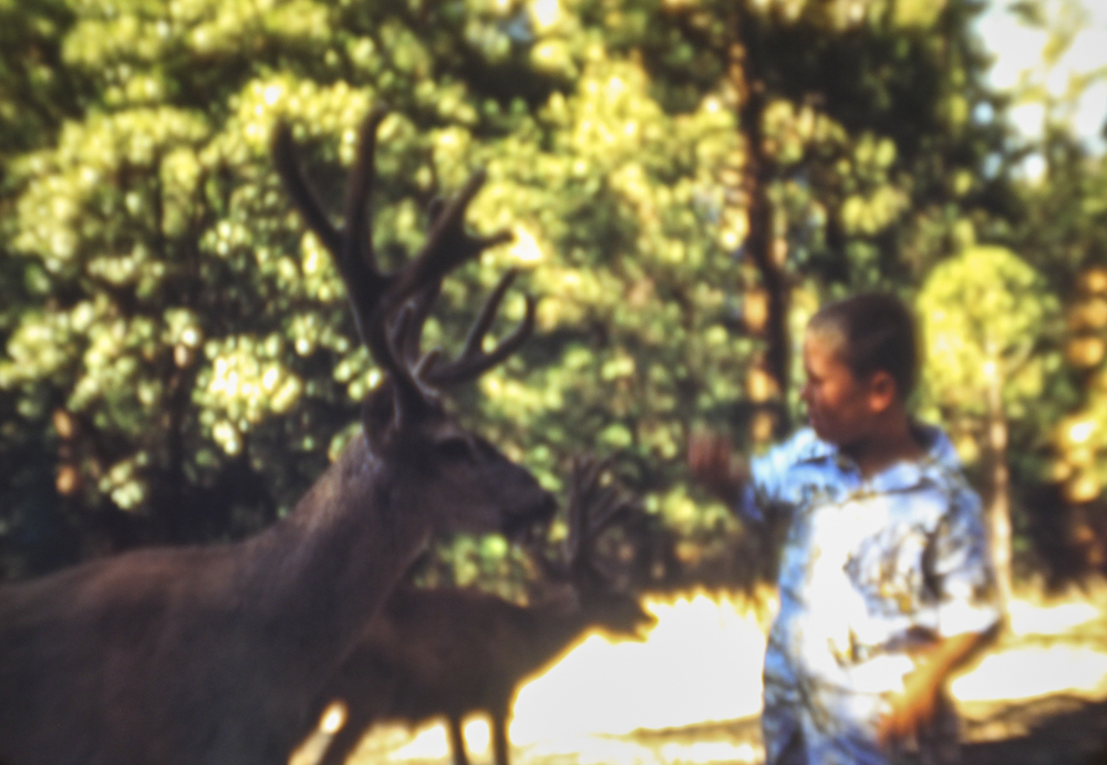 Boy and Rather Large Deer