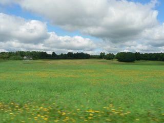 whitefield.jpg