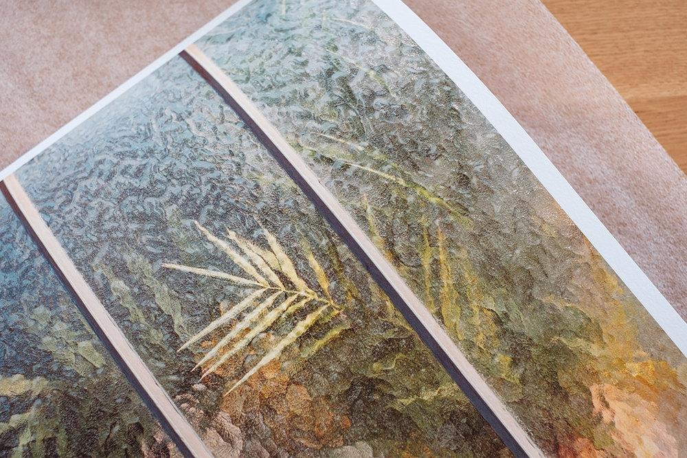 Botanical - Arecaceae Palmae - 30x45cm - Hanemühle Photo Rag 308gsm