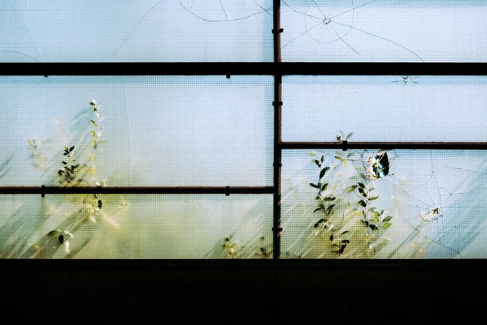 samuel-zeller-geneva-botanical-3378.jpg