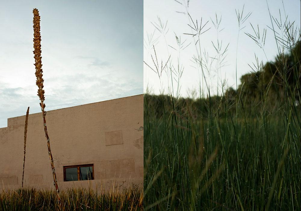 Desert_Grass.jpg