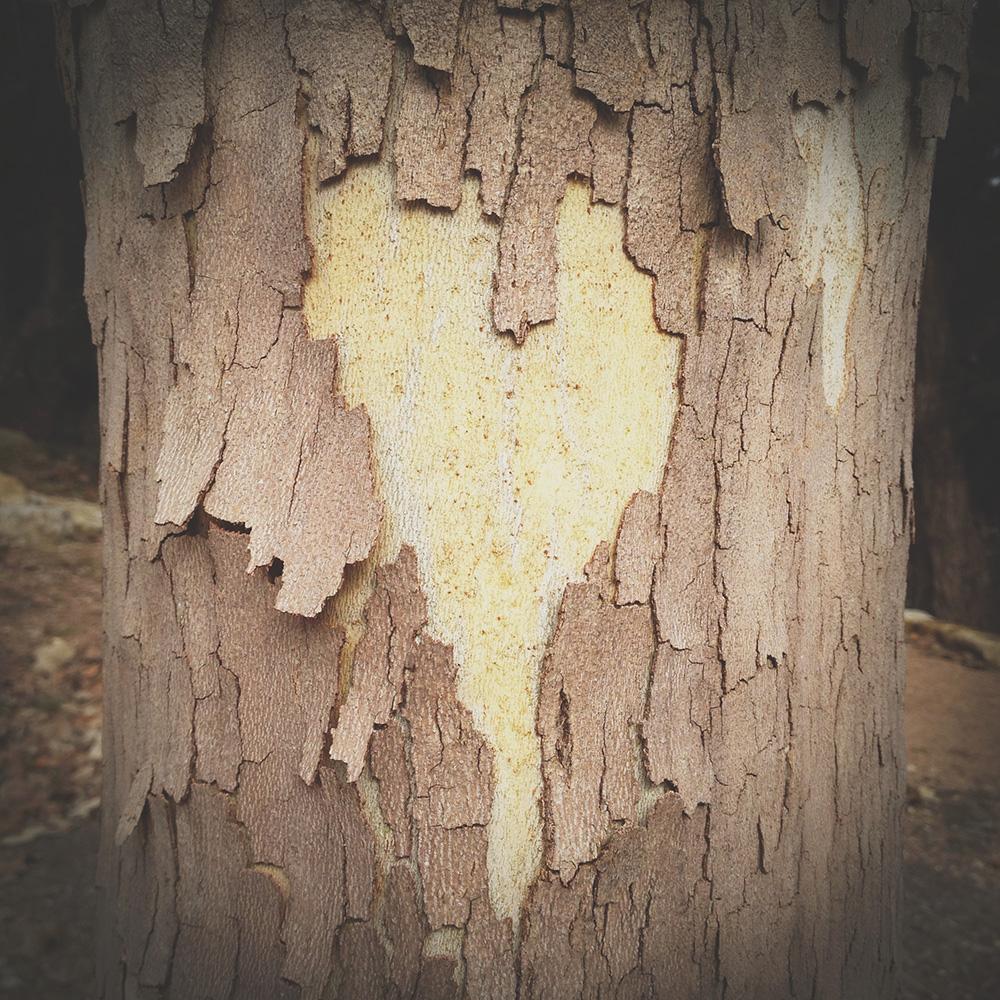 Heart_Tree.jpg
