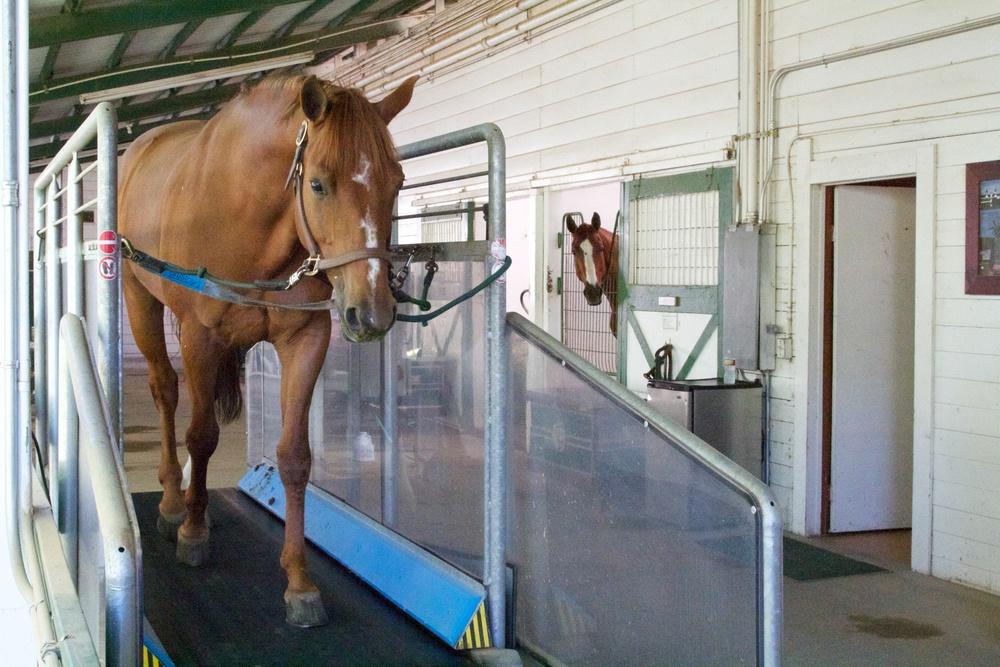 Horse treadmill