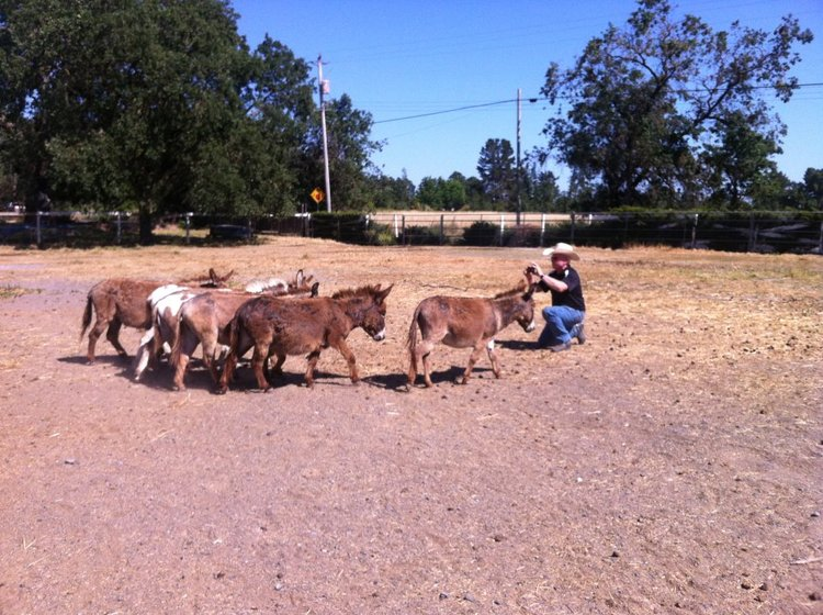John the donkey whisperer