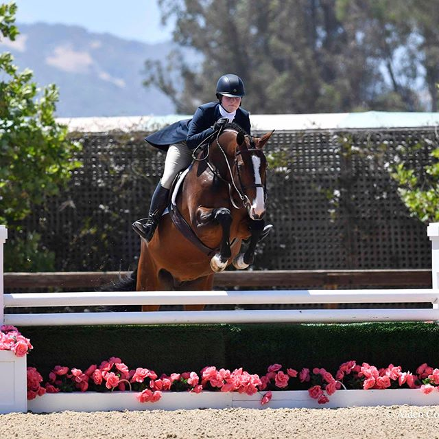 We are so proud of Talia Schonberger!! She just graduated from high school, going to college next year and is riding like a rockstar.  A few of her results from the Sonoma Horse Park Horse Show include... 1st place in the 1.20 Jr/Am Jumpers with Barthes and ended up Reserve Champion her first time competing in the division.  2nd + 4th place with Le Reve in the 3'6 Performance Hunters and 5th place (winning a super cool hover board) in the SHP Equitation Challenge!! 🐎🎉🐎🎉🎊