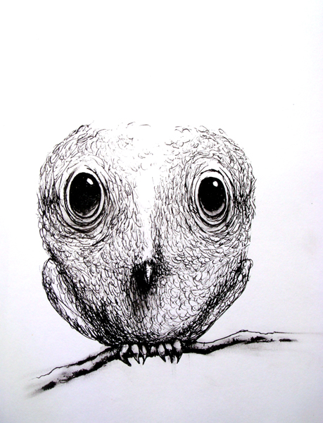 owl study, ink on paper, 8x10