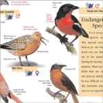 bird-book-detail1.jpg