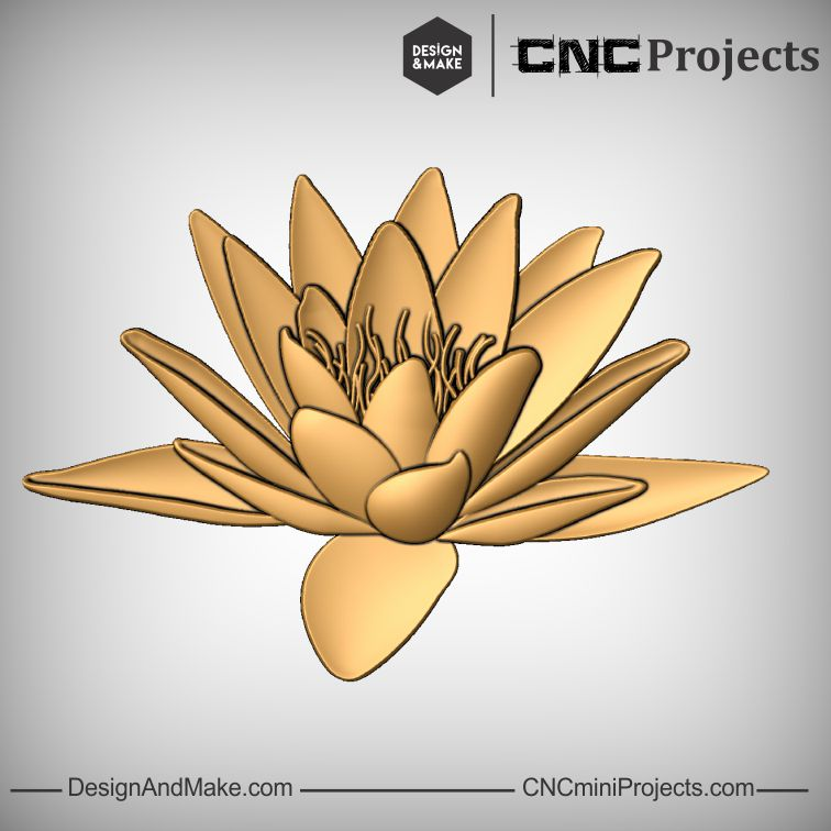 Water Lily No.1.jpg