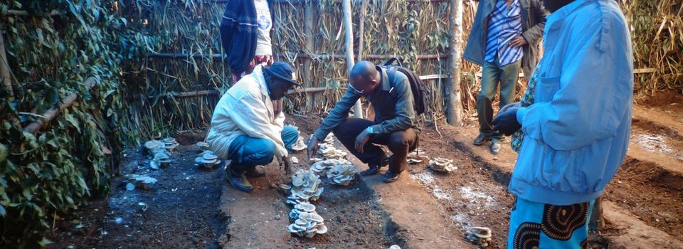 Farmer training, Kigali Farms, Rwanda