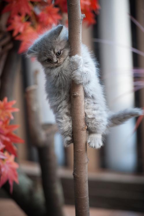 Hey little kitty....