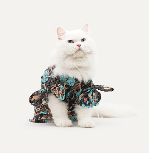 Oh Kitty, what are you wearing? 2014 Unit Bamboo Calendar casting.