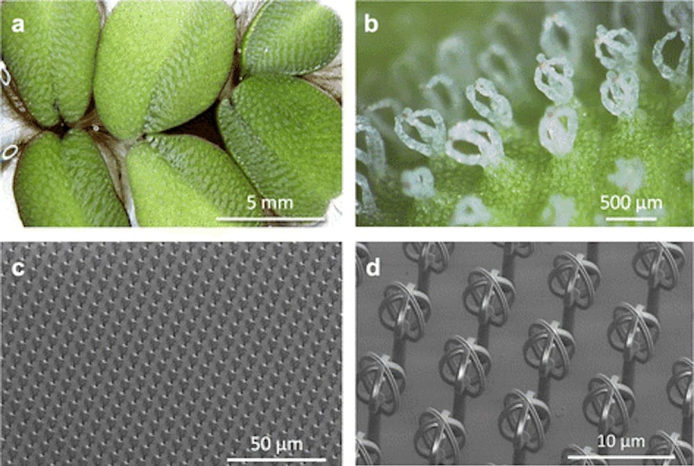 Duplicating a hydrophobic natural leaf surface using microscopic 3D printing