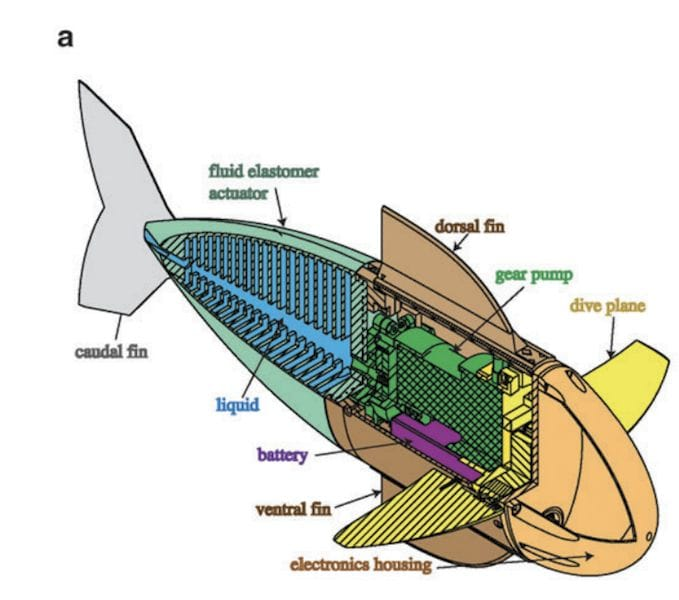 Design for a soft-robotic 3D printed fish