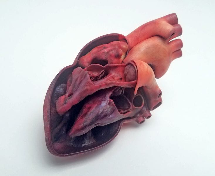A color-accurate 3D print of a human heart by Mimaki